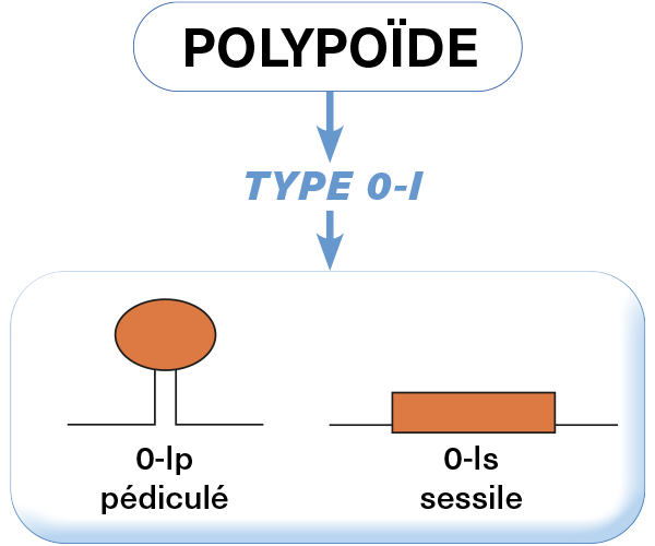 polyopide2